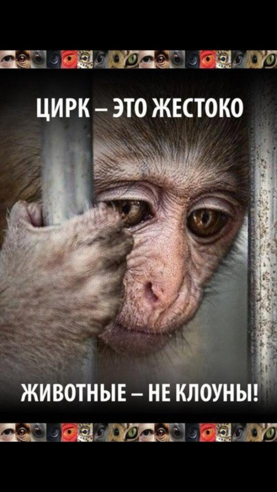 animal cruelty in circuses